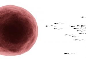 bevruchting